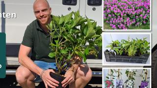 Yarinde Tuinplanten en borderplanten